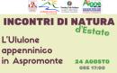 """""""Ululone appenninico in Aspromonte"""". Sabato 24 agosto ultimo appuntamento con gli """"Incontri di Natura"""" versione estiva"""
